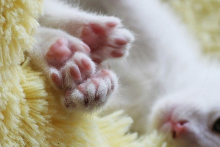 Kitten, paws, cute, bright wallpapers