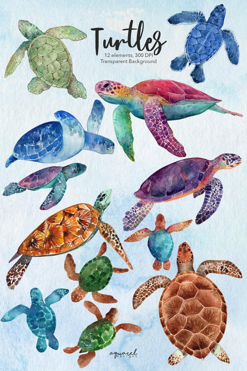 Watercolor Sea Turtles Clipart Baby Showers Nursery Decor Etsy Watercolor Sea Turtle Watercolor Sea Turtle Drawing