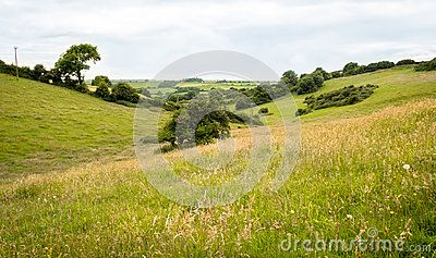 Long distance view through a valley of fields in summer. Long grasses prevail…