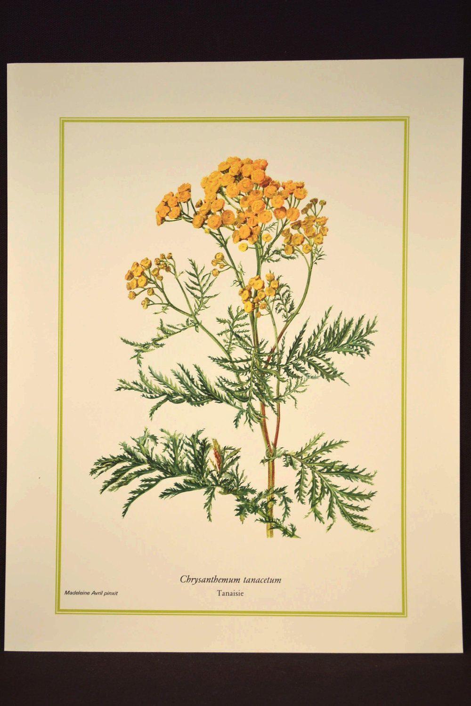 Yellow Wild Flower Wall Decor Nature Print Botanical Art | Flower ...