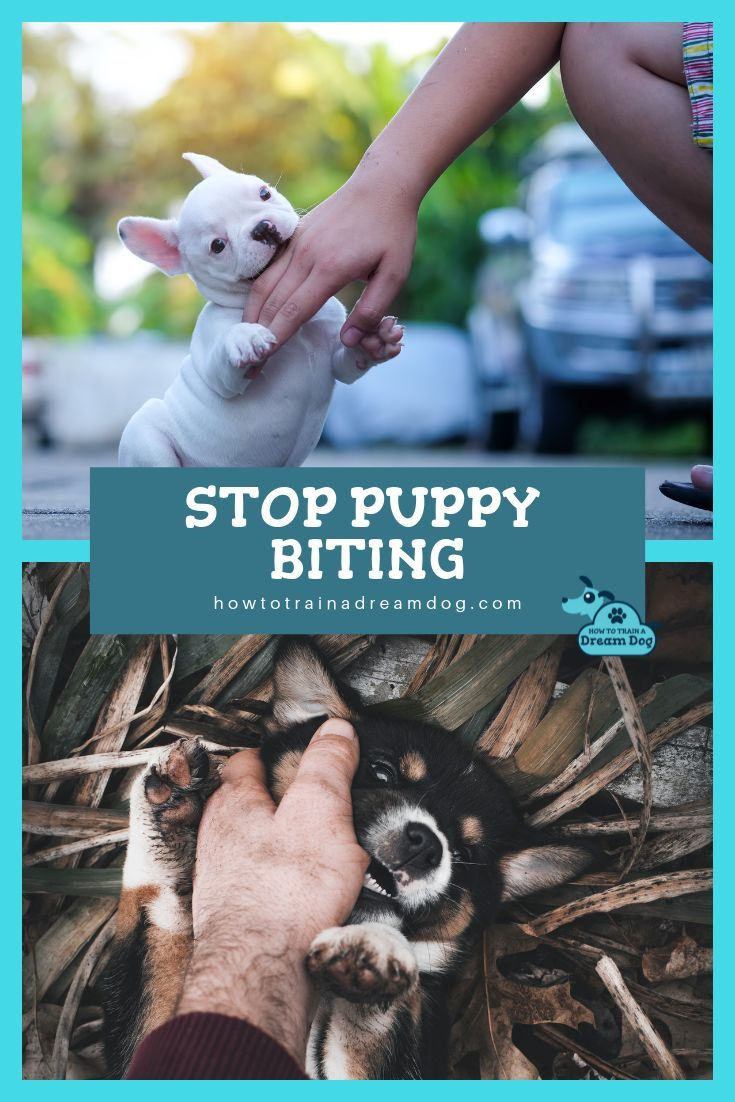 Stop Your Dog From Biting Puppy biting, Puppy care, Puppies