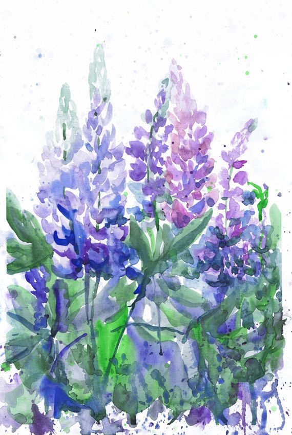 Watercolor Flowers Bluebonnet Painting Botanical Art Watercolor Flowers Flower Wall Art Flower Painting