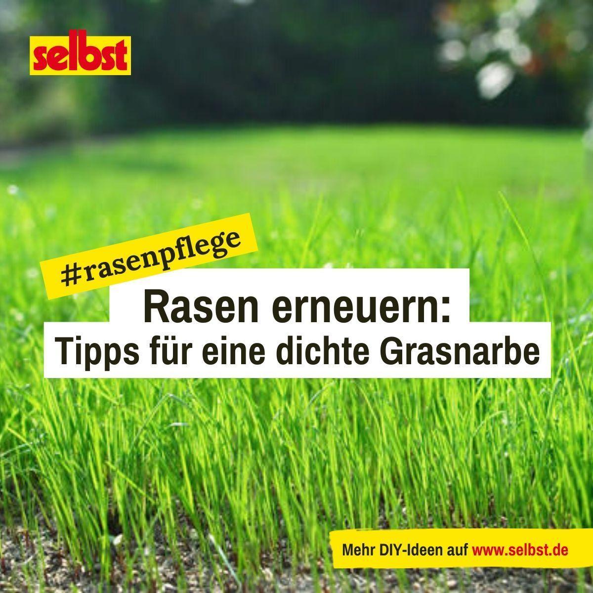 Rasen Erneuern Selbst De In 2020 Rasen Erneuern Unkraut Im Rasen Rasen