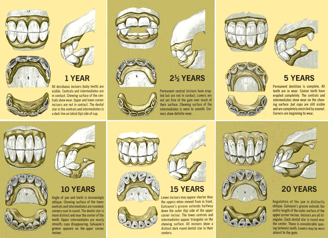 Great Ideas To Make Getting Great Dental Care Easier