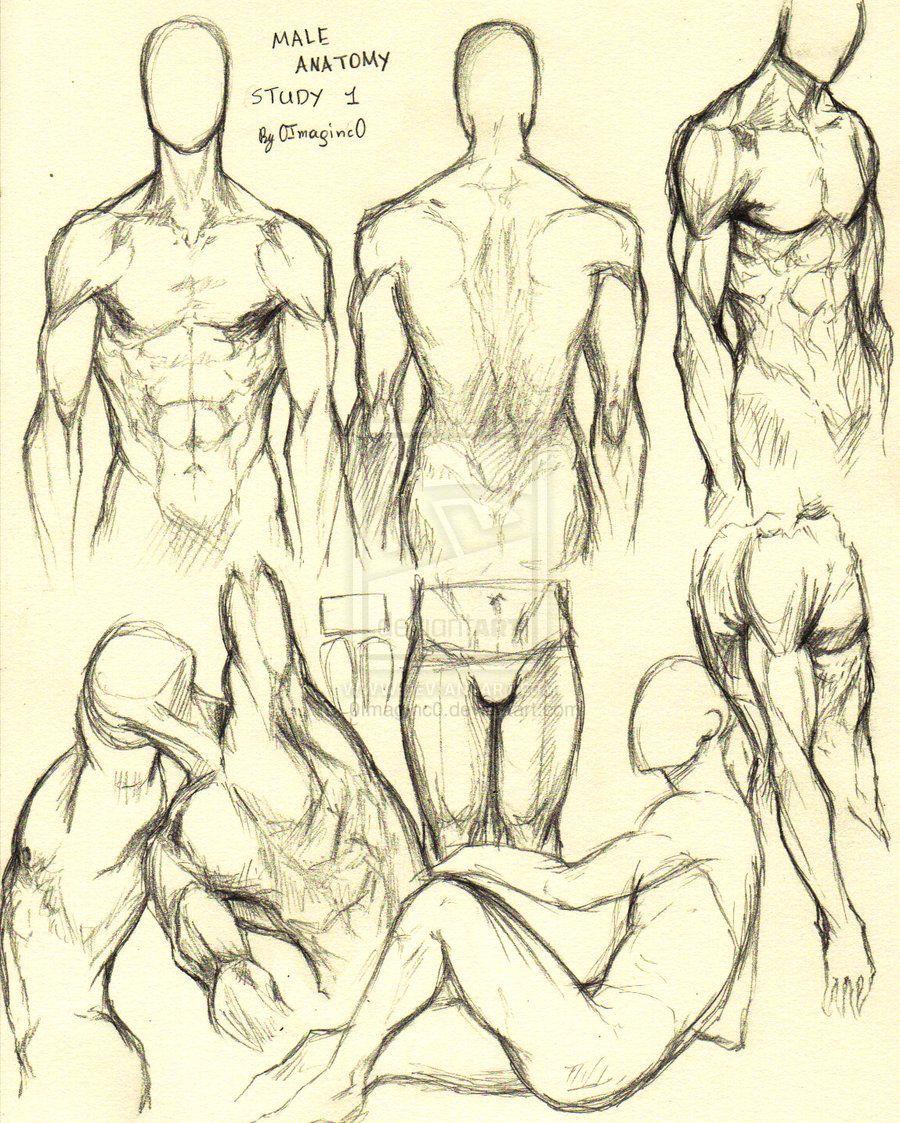 Male Anatomy Study 1 by 0ImagInc0.deviantart.com on @deviantART ...