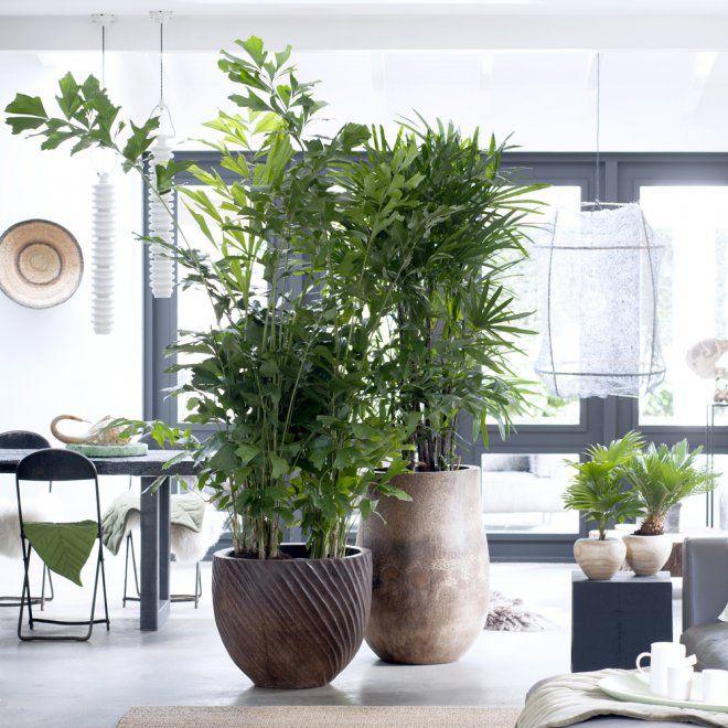 trio de verre green inside grandes plantes d 39 int rieur. Black Bedroom Furniture Sets. Home Design Ideas