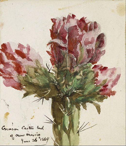 Toile toile tendue encadrée giclée le célèbre artiste peinture à l'huile Vincent Colyer Crimson Cactus bourgeon du nouveau - mexique(China (Mainland))
