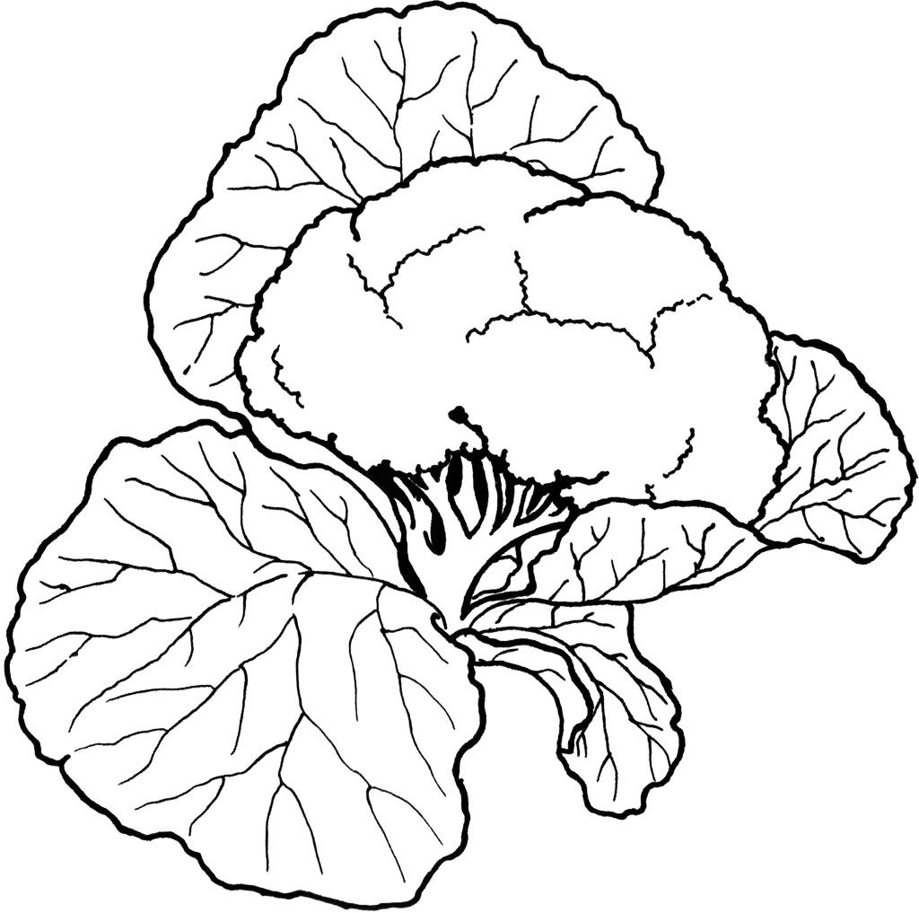 Vegetable Coloring Pages Warna Krayon Dan Tanaman