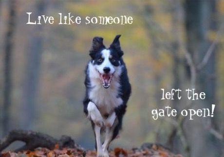 Happy Border Collie dog birthday card | Zazzle com