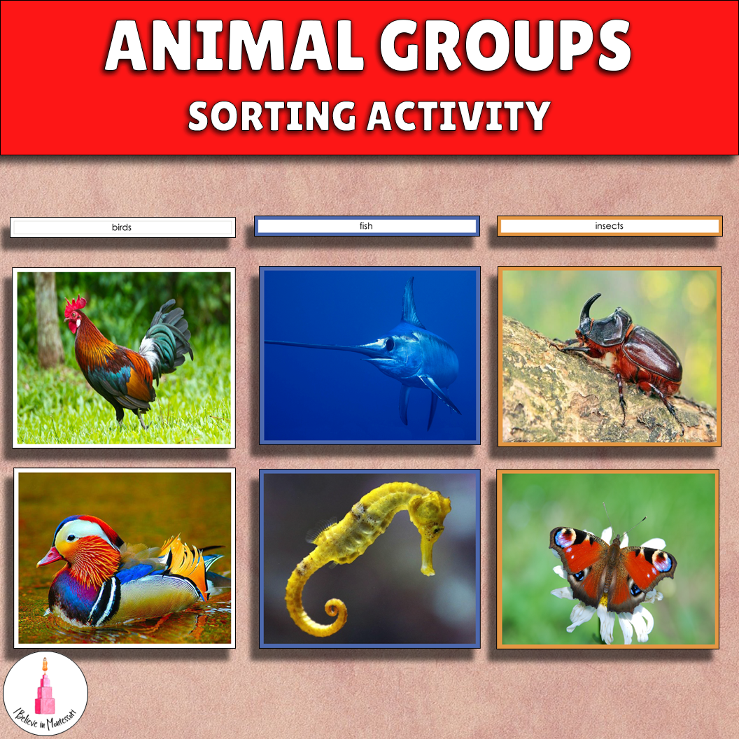 Animal Groups Activities Pack