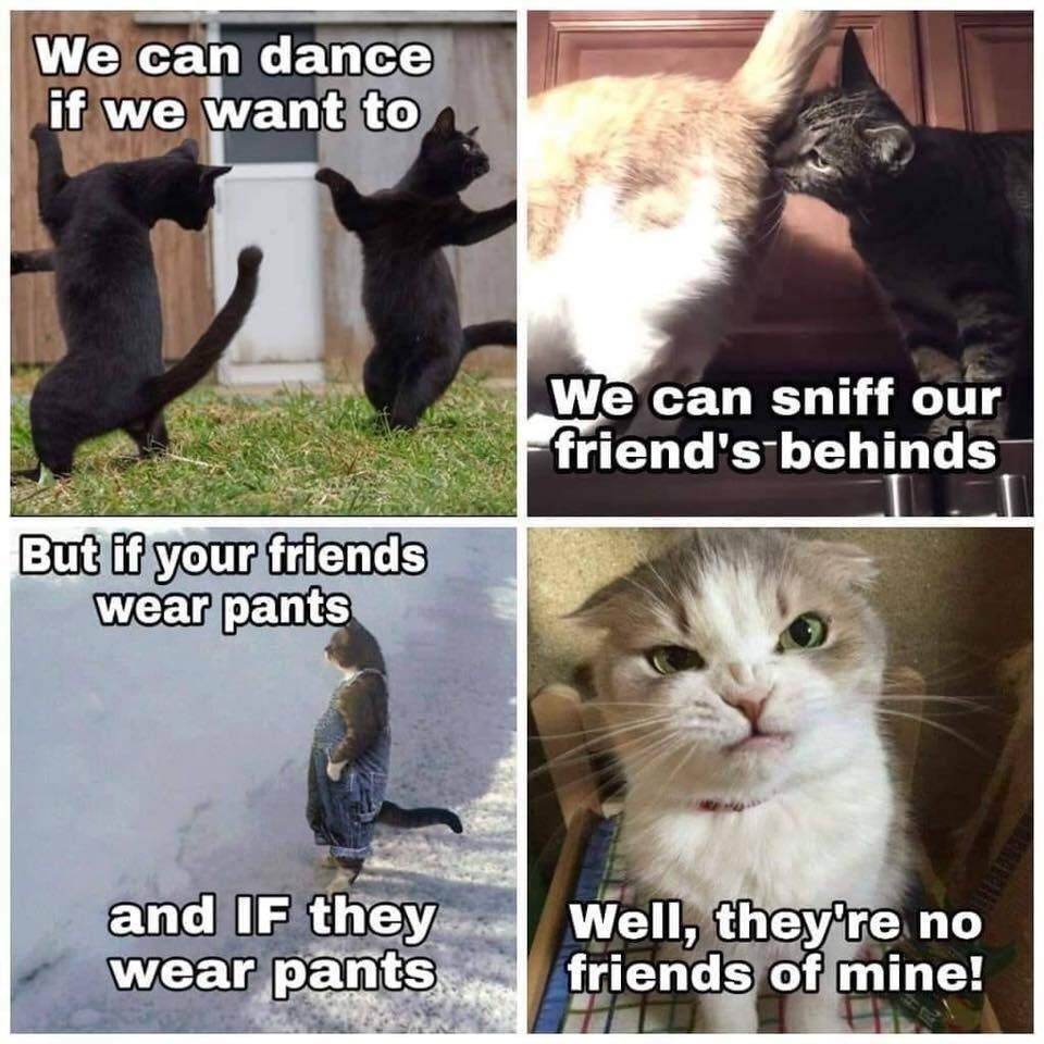30 Purrfect Cat Memes To Make You Lol Funny Cat Memes Cute Cat Memes Cute Animals With Funny Captions