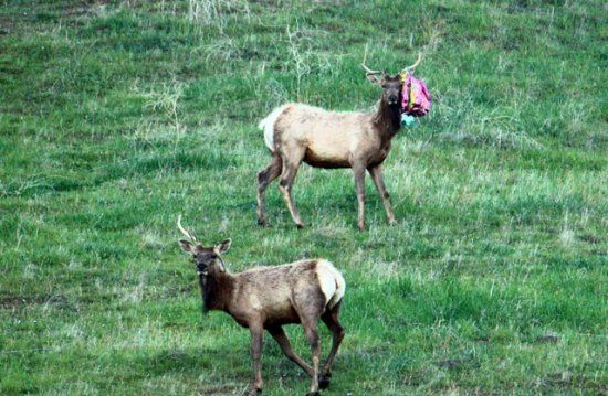 Image result for ribbons on deer trash