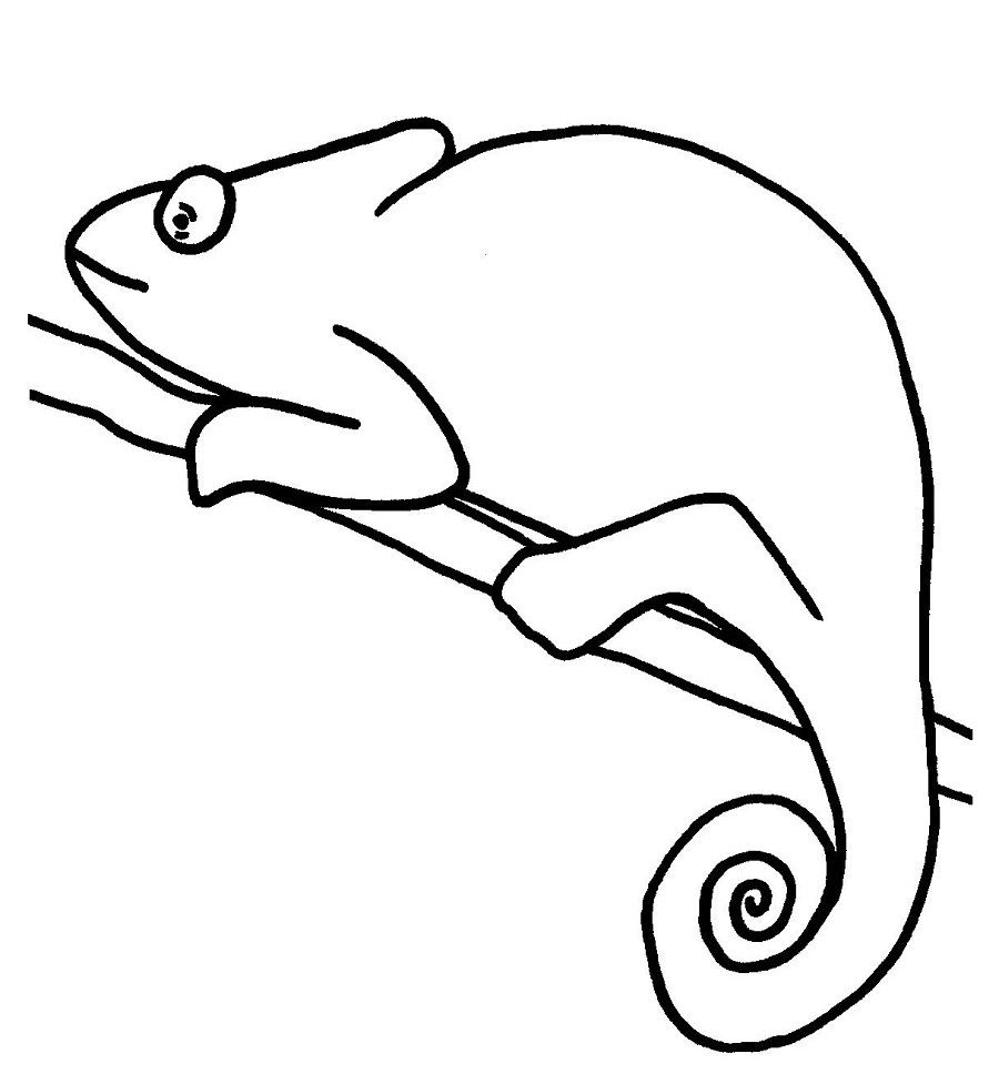 Free Coloring Pages Of Mixed Up Chameleon Chameleon Color
