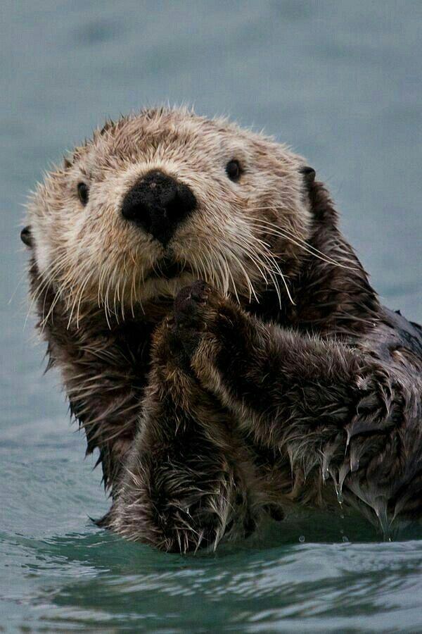 Cute Otter Otters Cute Sea Otter Animals Beautiful