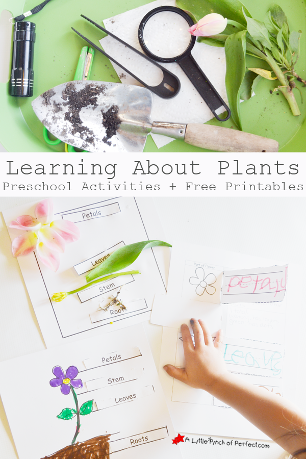 Learning About Plants: Activities and Free Printables for Kids-fun ...