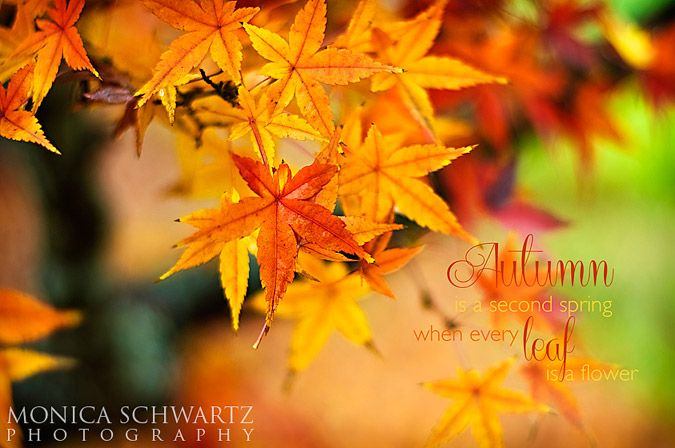 Free Autumn Foliage screen saver for your computer!  http://goo.gl/yGOSjR