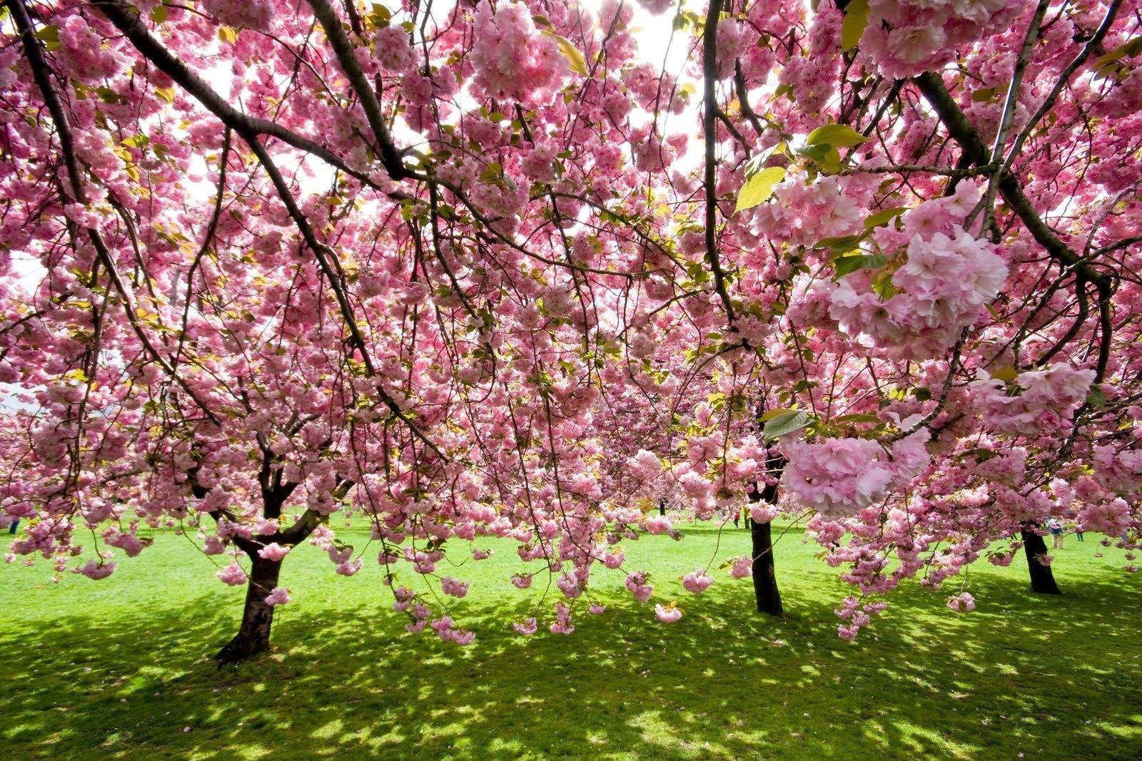 10 Inspirational Botanic Gardens #botanicgarden