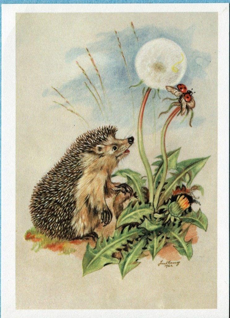 Открытки с животными ежик, открытках
