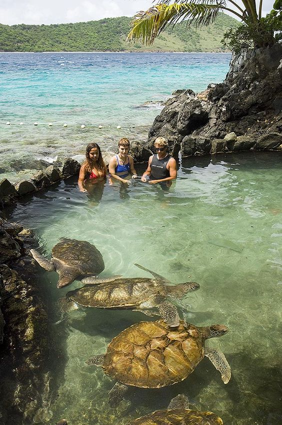 turtle pool coral world st thomas travel vacation places rh pinterest com