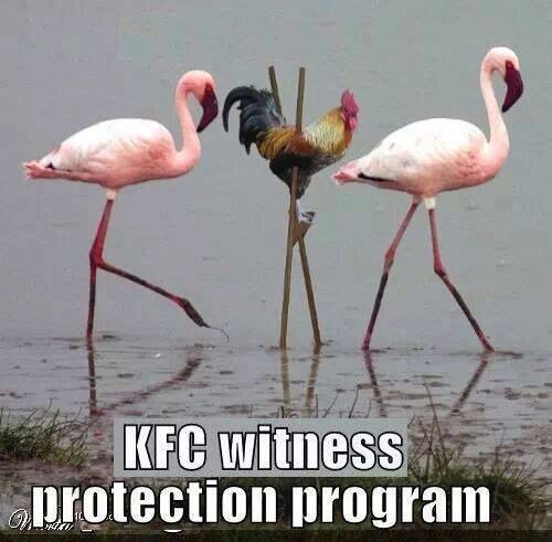 Pin By Kathleen S Place On Birds Of A Feather Animal Captions Funny Animal Memes Funny Animal Pictures