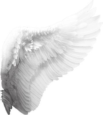 Wings Png Angel Wings Photography Wings Png Angel Wings Png