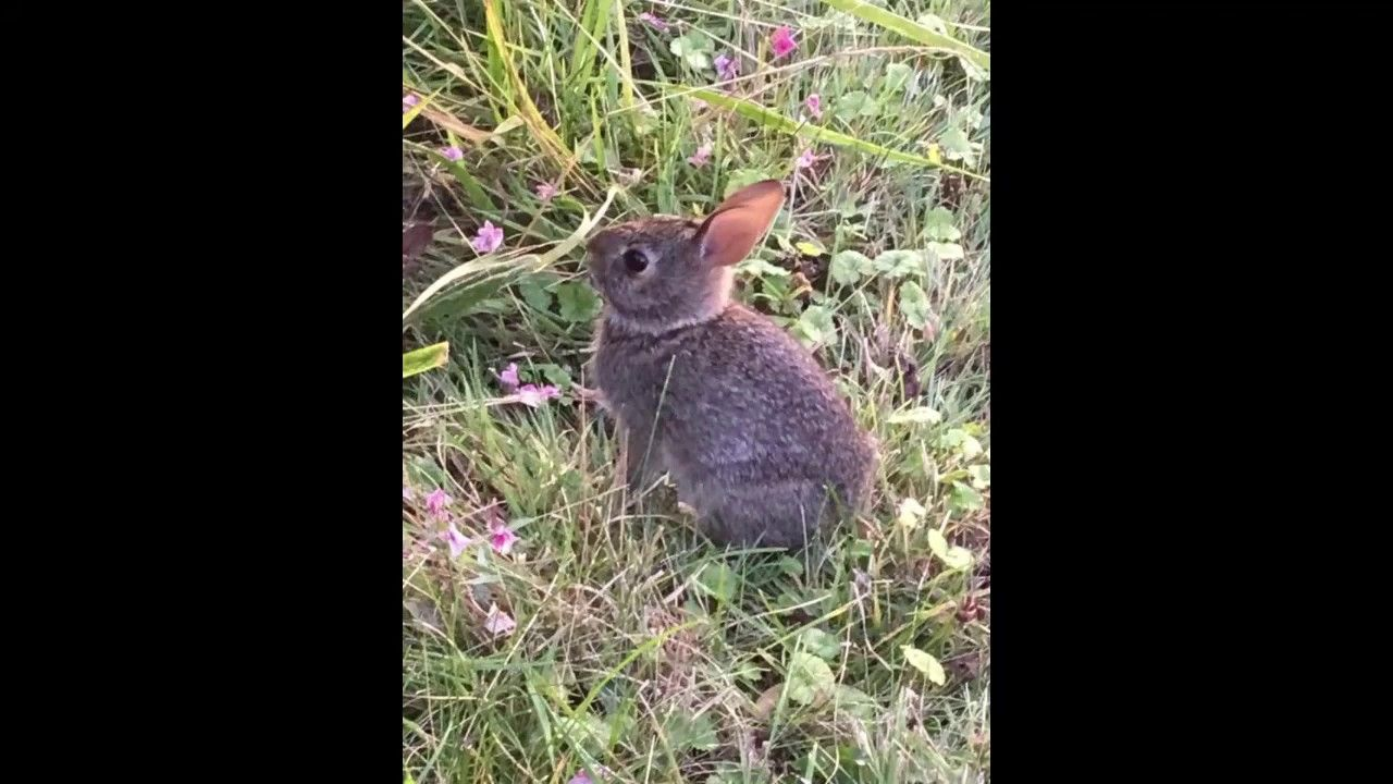 🐰A cute baby bunny in the front yard 🐰