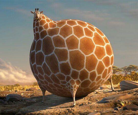 медленный гифка толстый жираф после нового года особенно пригодится