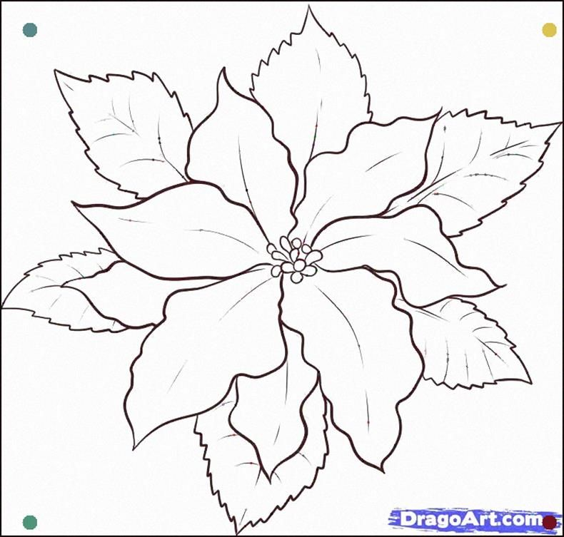 How To Draw A Poinsettia Step 5 More Christmas Coloring Pages