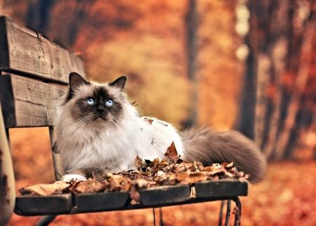 Cat On Bench Cute Cat Autumn Animal Fall Cats Cats Cats And Kittens
