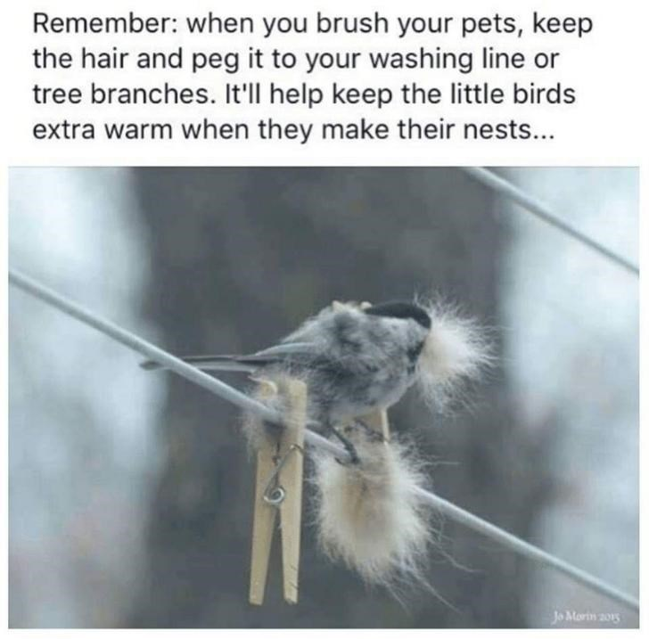 Solid Bird Collection To Ruffle Your Feathers 33 Memes In 2020 Your Pet Pets Pet Names