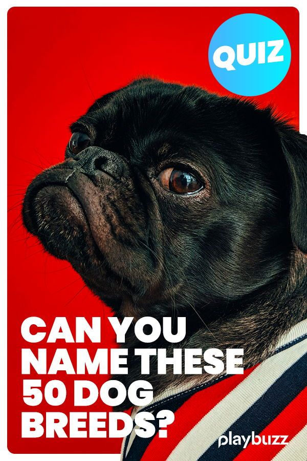 Only 1 In 25 People Can Name The 50 Most Popular Dog