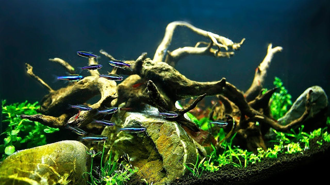 HOW TO Aquascape on a small budget NON-CO2 injection in ...