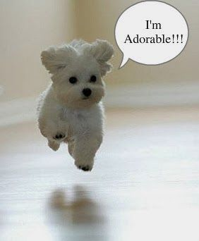 Advertise Your Puppies For Free How To Sell My Puppy Dogs Puppies Puppies Things To Sell Dogs And Puppies
