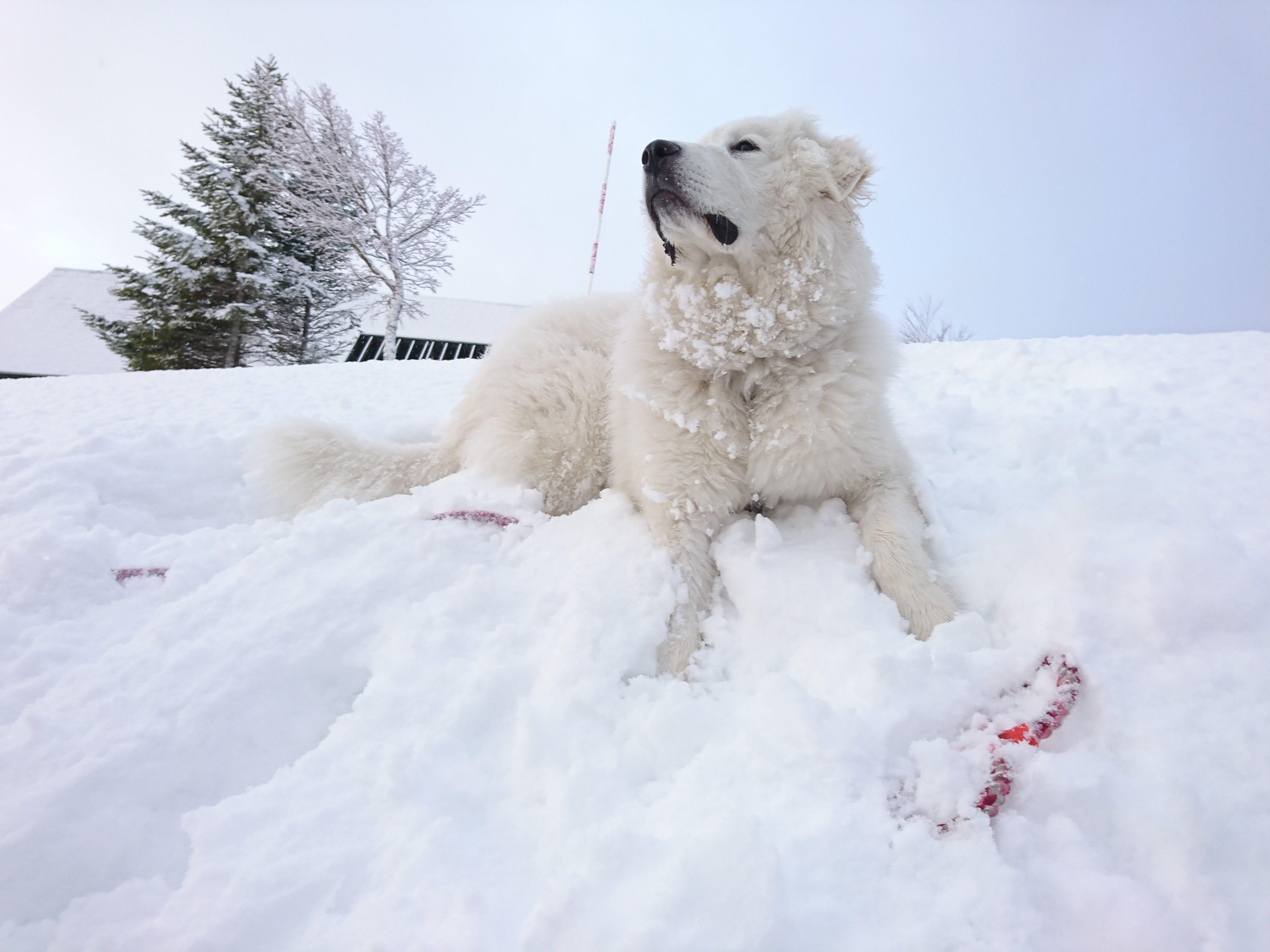 winter seasonの楽しみ方 ペット ドッグラン 雪遊び