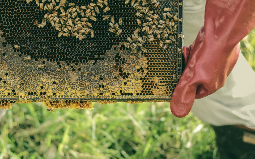 How to Keep Bees Away From Your House Backyard