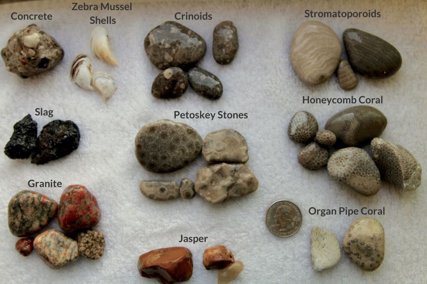 Beachgoer S Guide To Lake Michigan Fossils And Rocks Lake Michigan Michigan Fossils
