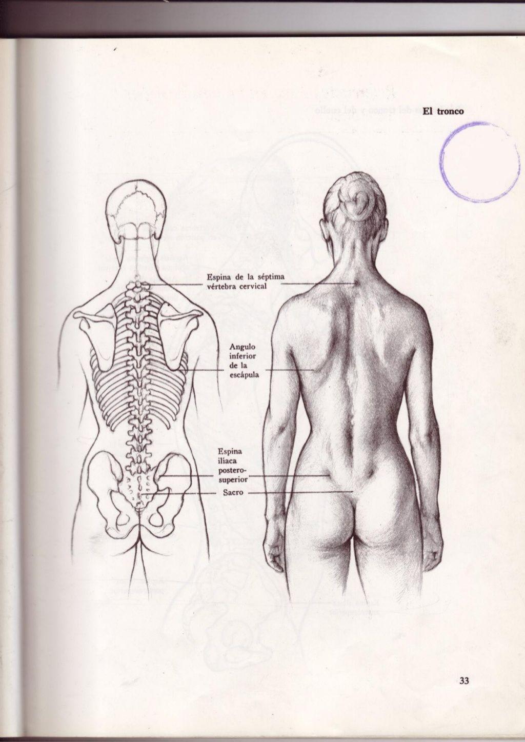 Dibujo anatómico de la figura humana hun | Dibujo | Pinterest