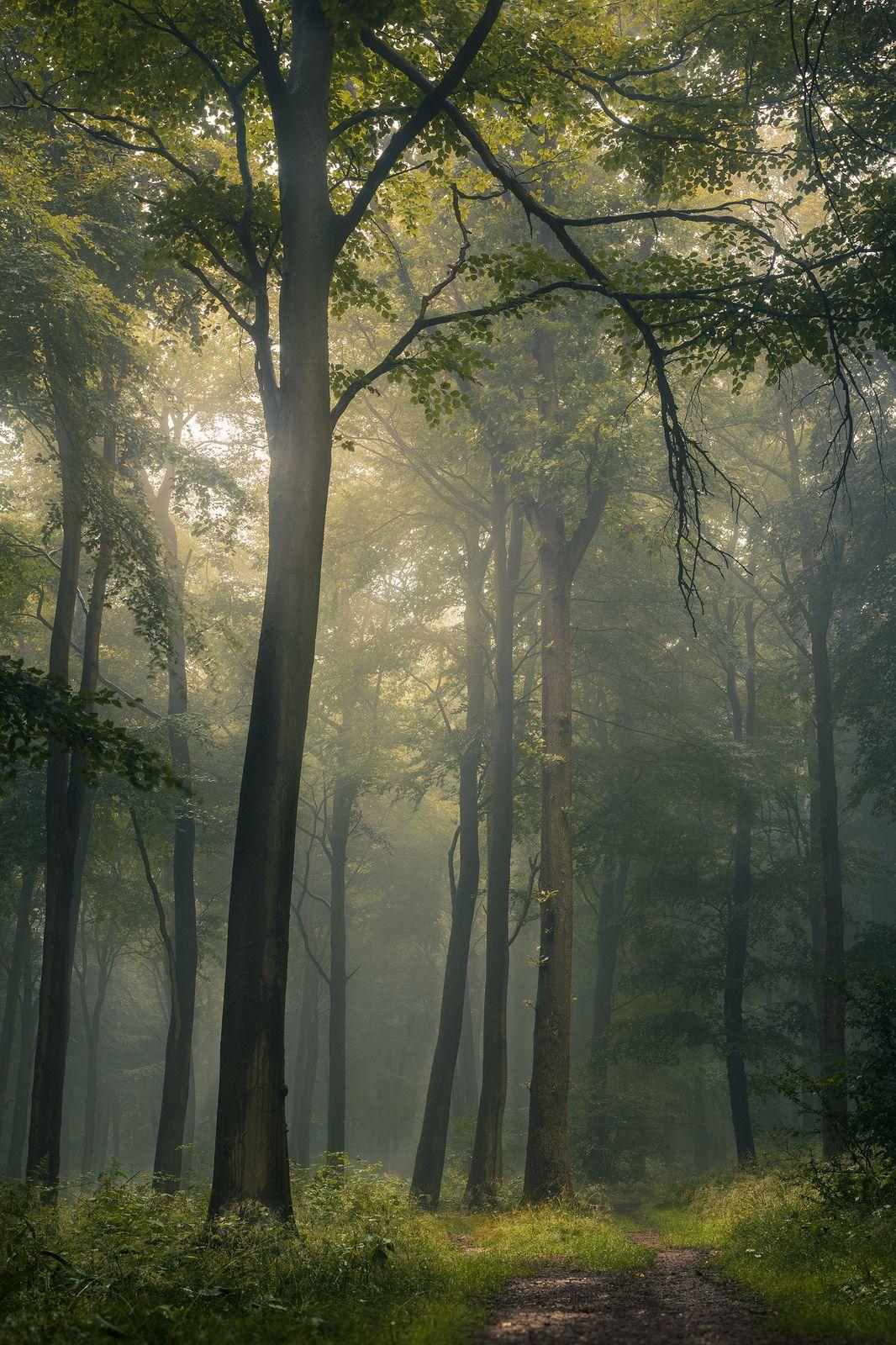 90377 Natural Forest Hdr By Jago Bolduc Prachtige Natuur Natuurlijk Landschap Bos Fotografie