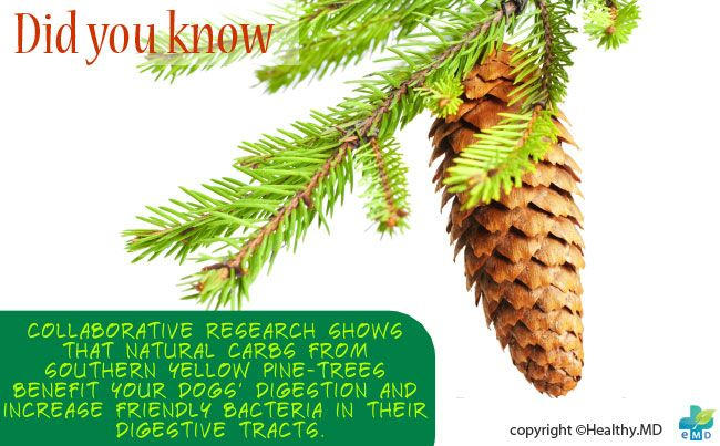 How Southern Yellow-Pine Trees Benefit Your Dog