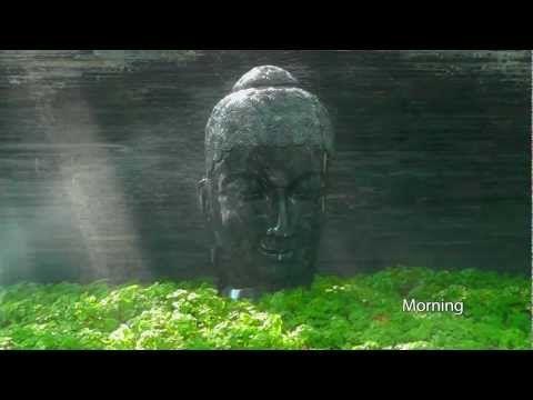 OSHO: Impressions Four - Morning