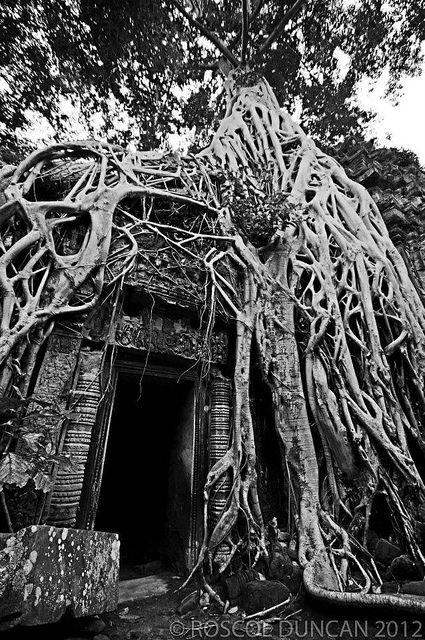Ankor Wat,Cambodia  These tree roots were amazing!