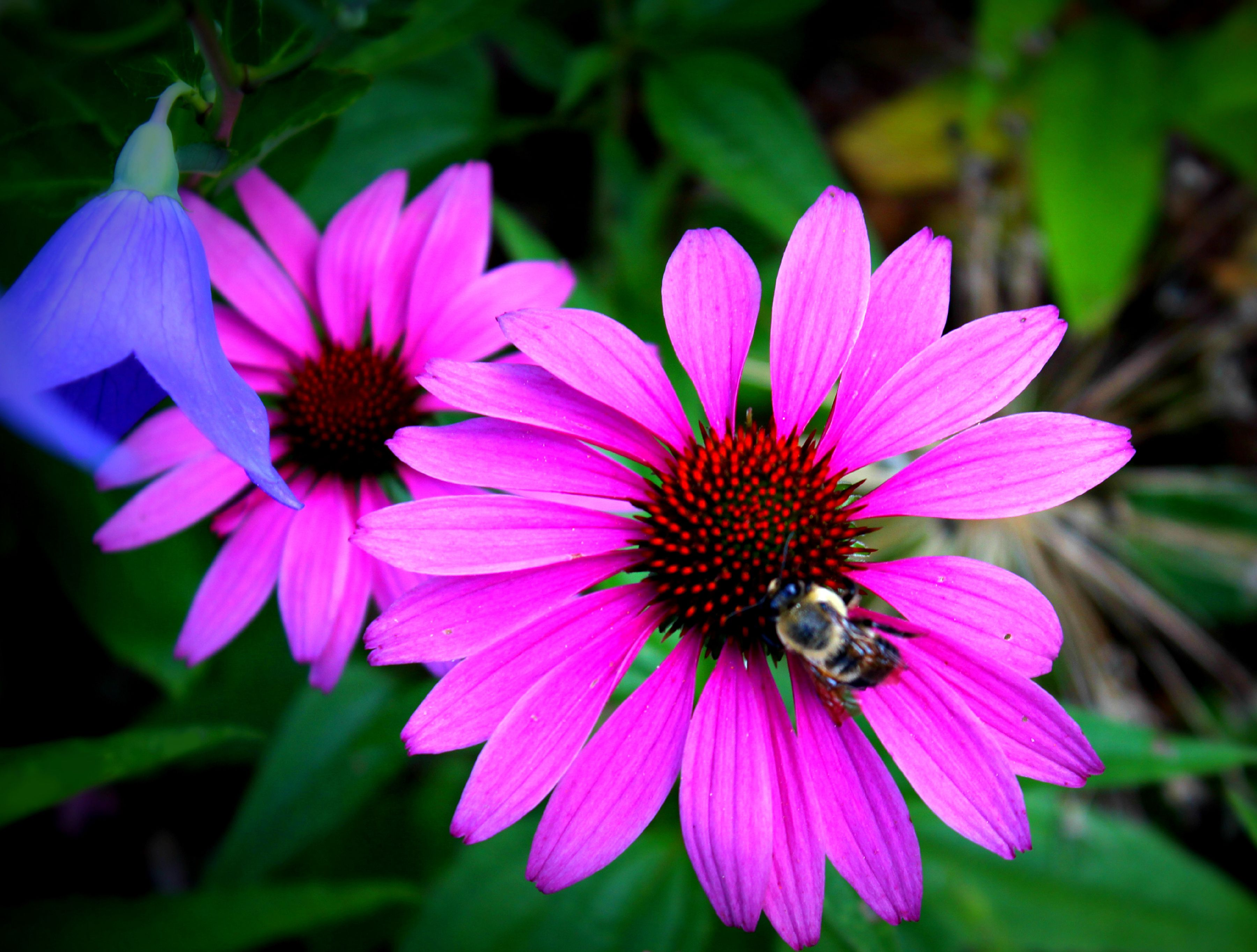 Beautiful flowersg 36002728 flower gardenflowers beautiful flowers images izmirmasajfo Choice Image