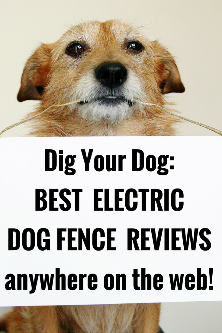 Electric Dog Fences Are An Ideal Way To Keep Your Dog Safely Contained Check Out The Most Detailed Electric Dog Fence Pet Fence Dog Fence Invisible Fence Dogs