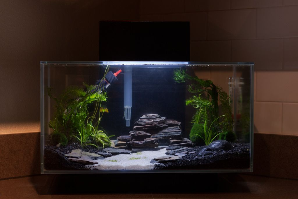 Fluval edge 23l google search fish tanksss pinterest for Fluval fish tank