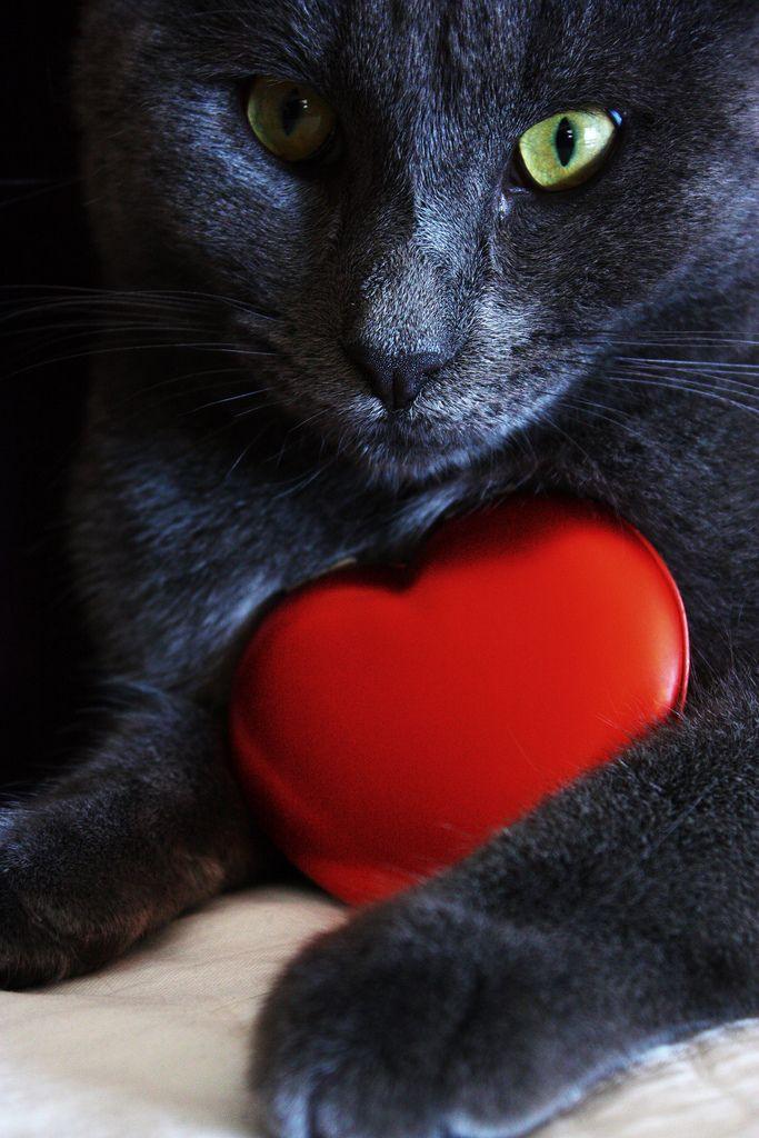 если фото котят с сердечками счастливые