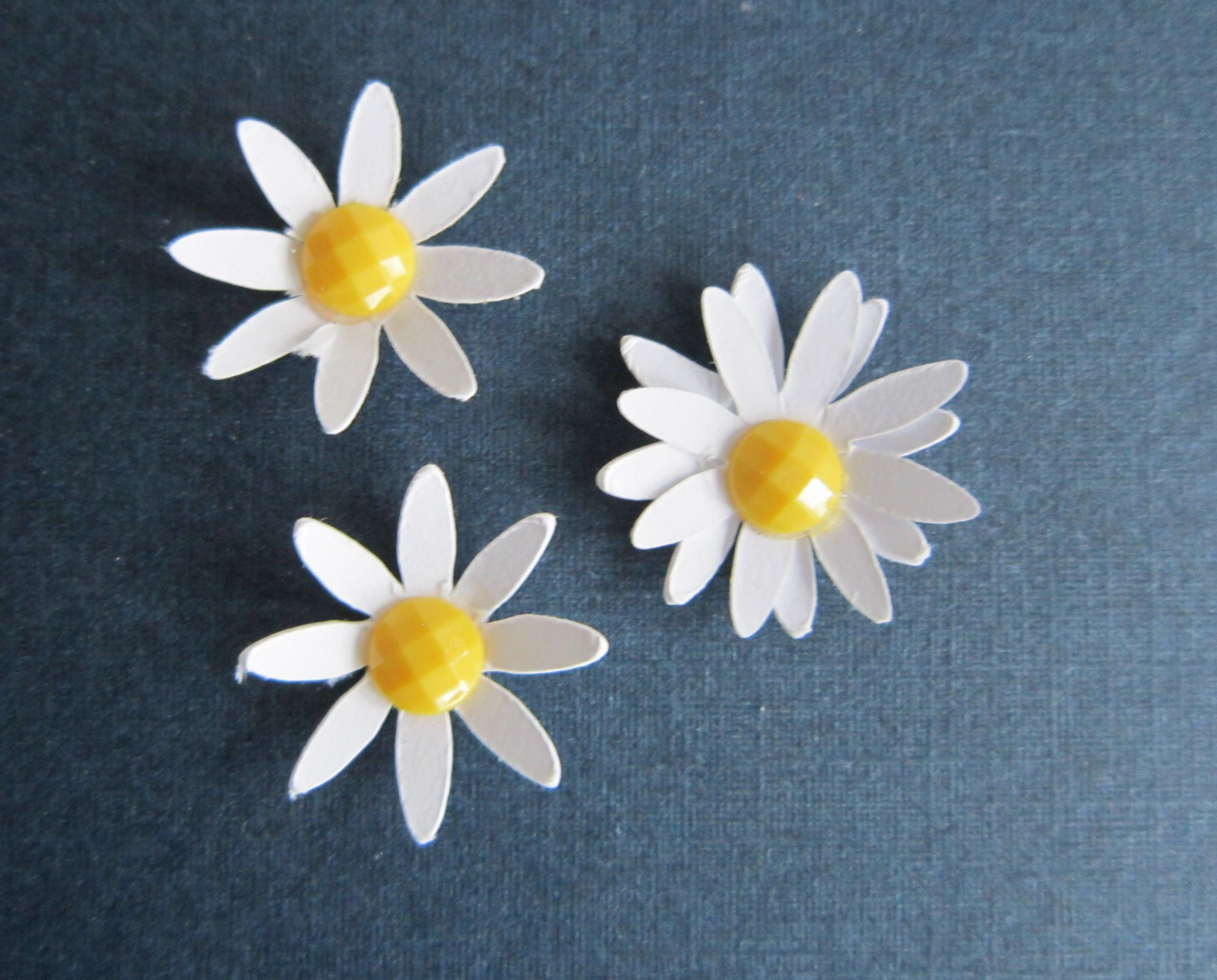 Close up of single and double daisies flowers to use on home close up of single and double daisies izmirmasajfo Image collections