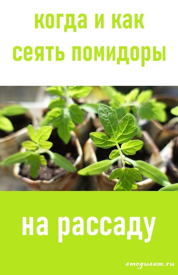 ясколка когда сеять семена на рассаду