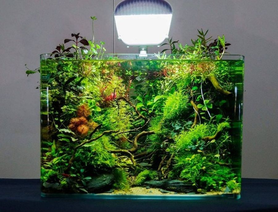 Amazing Aquascape Gallery Ideas that You Never Seen Before ...