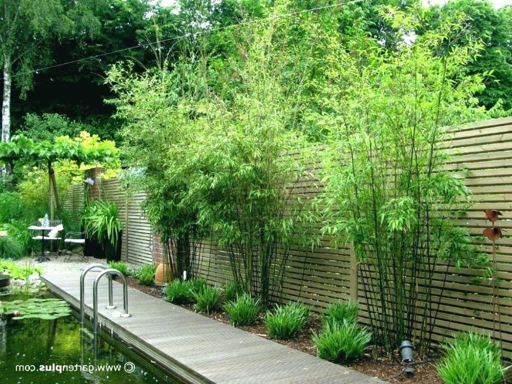 Einzigartig 43 Zum Zaun Pflanzen Sichtschutz Check more at