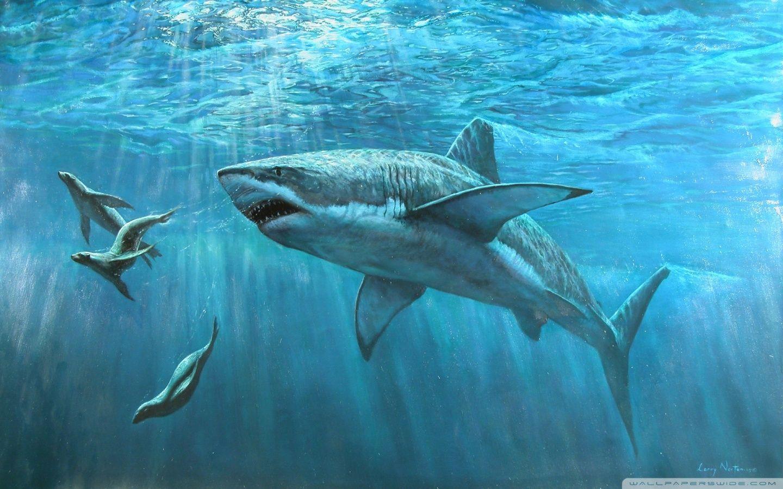 hammerhead shark paintings - Google Search | Shark Shak | Pinterest